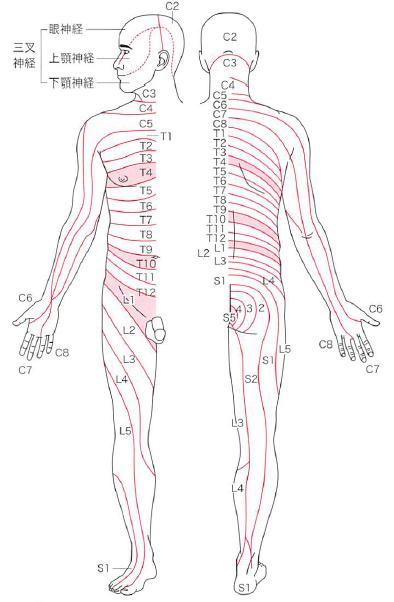 感覚検査(触覚・痛覚・運動覚・位置覚・振動覚・二点識別覚テスト)を解説