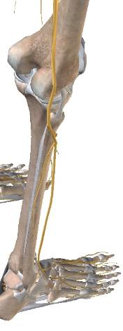近位脛腓関節モビライゼーション1