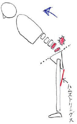 ハムストリングスと仙腸骨関節