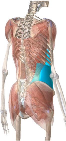 腹横筋のリハビリ(理学療法)