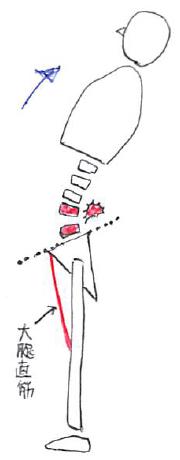 大腿直筋と仙腸関節