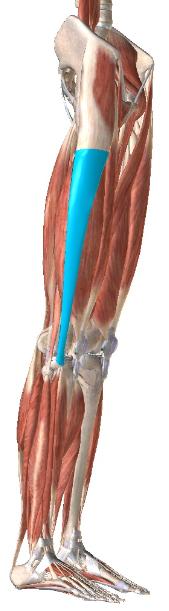 腸脛靭帯 リハビリ 理学療法