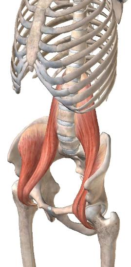 大腰筋と腸骨筋2