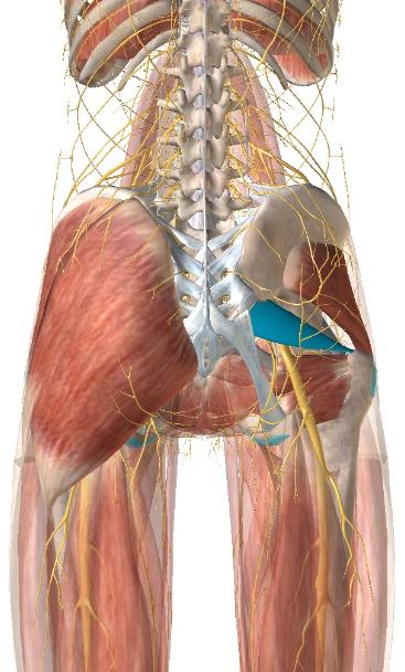 梨状筋症候群1