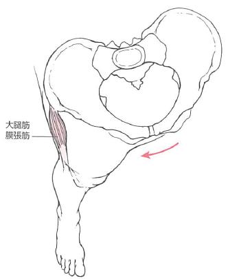 大腿筋膜張筋と歩行