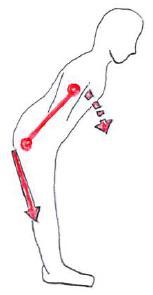 股関節 前屈