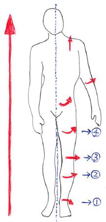 足部回内による上行性運動連鎖