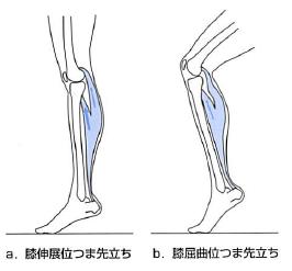 足関節底屈(膝屈曲・膝伸展位)