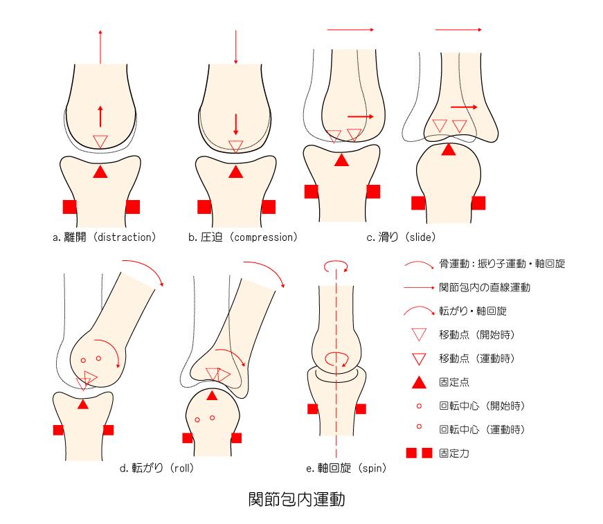 関節包内運動