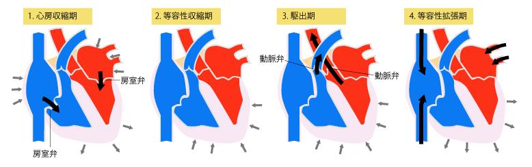 医療・介護の基礎知識でもある『心臓(heart)』『循環器』について、ザックリ解説するよ