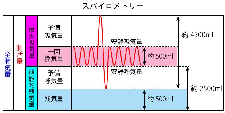 値 肺活量 基準