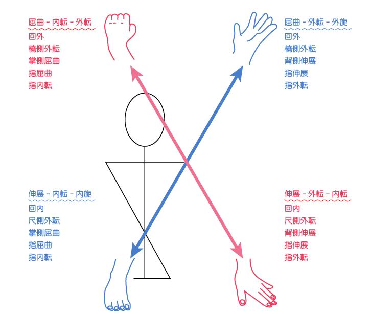 PNFパターン,上肢