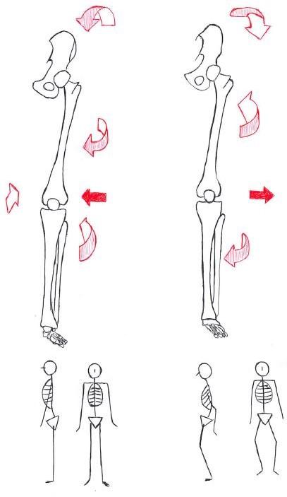 変形性膝関節症と運動連鎖