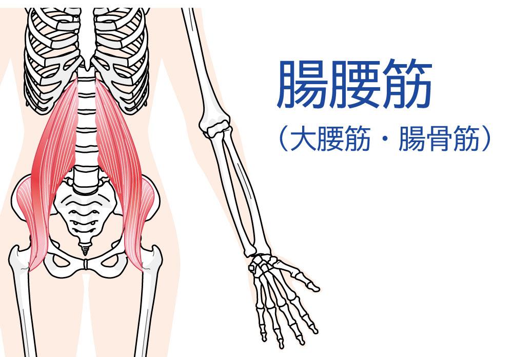 腸腰筋の作用は沢山あるよ(エビデンス参考)