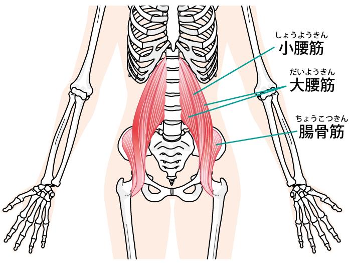 『トーマステスト(Thomas test)』を活用した腸腰筋ストレッチングを紹介