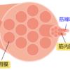 筋上膜と筋外膜の違いとは?『(狭義な)筋膜』もイラストで解説