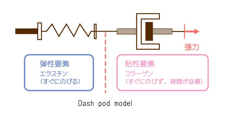 『エラスチン線維・コラーゲン線維』と『ダッシュポットモデル(弾性・粘性・粘弾性)』を解説