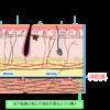 深筋膜って何だ?『(広義な)筋膜』をイラストで解説するよ