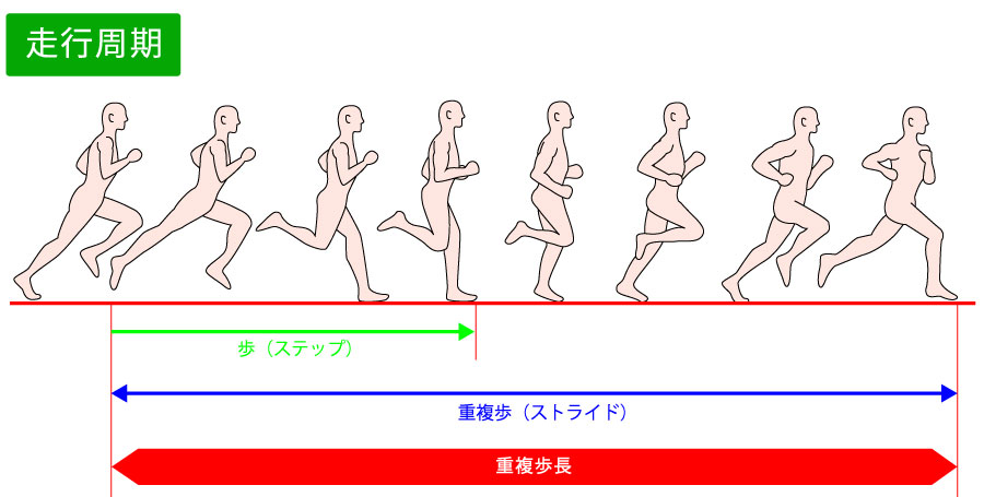 走行(ランニング)の特徴:走行周期・足部動的アライメント