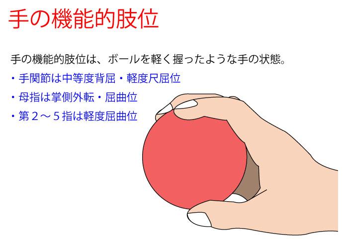 手の機能的肢位