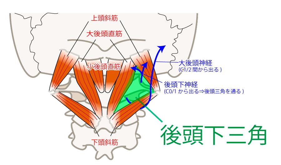 後頭下三角の位置・役割【後頚部の触診】